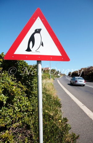 Penguins on Road, Warning Sign, South Africa