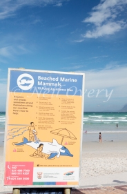Beached Marine Animal Guidelines Sign, Muizenberg, Western Cape, South Africa