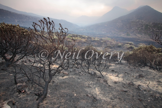 View of fire damage and smoke from still burning sections of the Silvermine Nature Reserve, part of Table Mountain National Park. 2015.