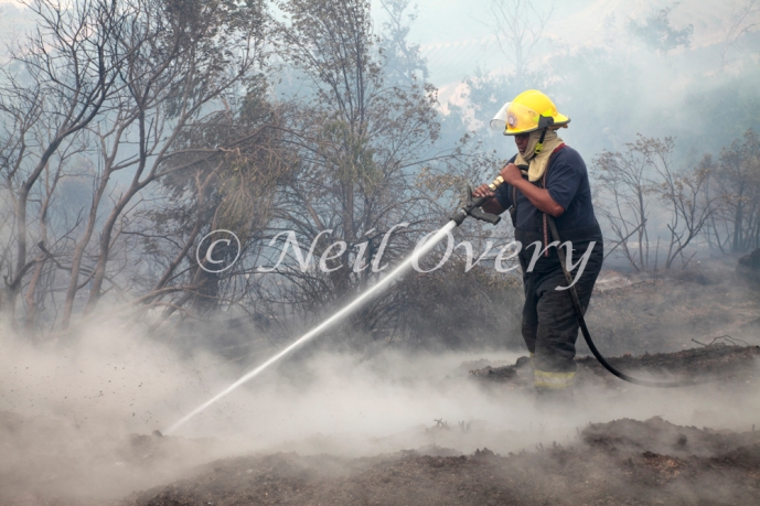 Fire fighters from Cape Town extinguish burning tree roots during a velt or forest fire, Table Mountain National Park, Cape Town, South Africa. March 2015.