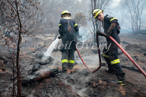Fire fighters from Cape Town extinguish burning tree trunks and branches during a velt or forest fire, Table Mountain National Park, Cape Town, South Africa. March 2015.