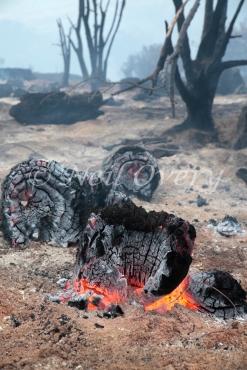 Burning landscape during 2015 fire, Vlakkenberg, Table Mountain National Park, South Africa