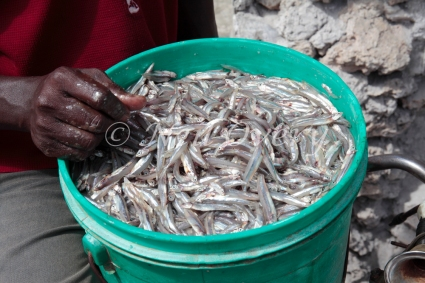 Small fish being sold at street market, Jambiani, Zanzibar, Tanzania