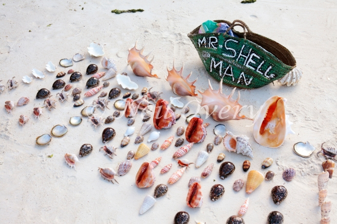 Shells for sale on the beach. It is actually illegal to sell or buy shells as the harvesting of sea shells is having a damaging effect on sea life and coral formations on the east coast of Zanzibar. Jambiani, Zanzibar, Tanzania