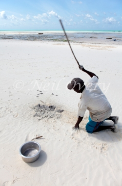 Man tenderising freshly caught octopus, Jambiani, Zanzibar, Tanzania