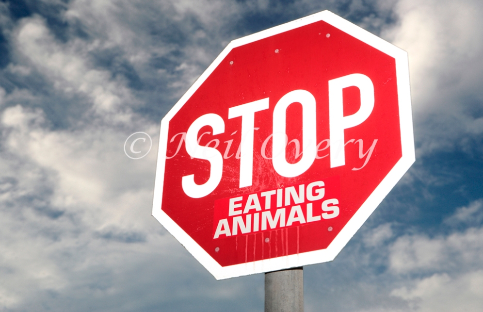 Street sign which has been changed to read, 'Stop Eating Animals', Cape Town, South Africa