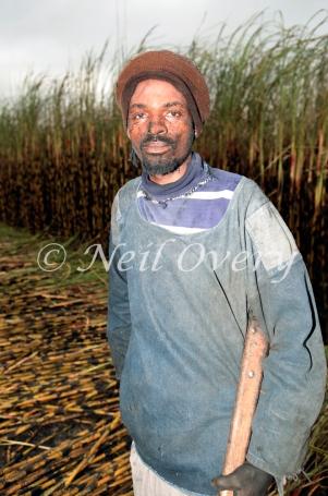 Man cutting sugarcane, Pongola, Kwa-Zulu Natal, South Africa