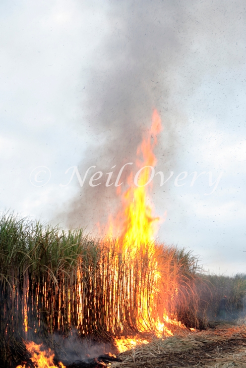 Sugarcane being burnt, Pongola, Kwa-Zulu Natal, South Africa