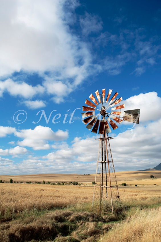 Wind pump (for extracting wate)r in field, Overberg, Western Cape, South Africa