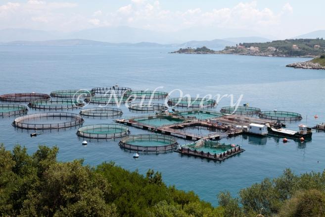 Fish Farm, Kassiopi, Corfu, Greece