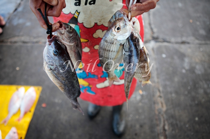 Fish caught at Kalk Bay, South Africa